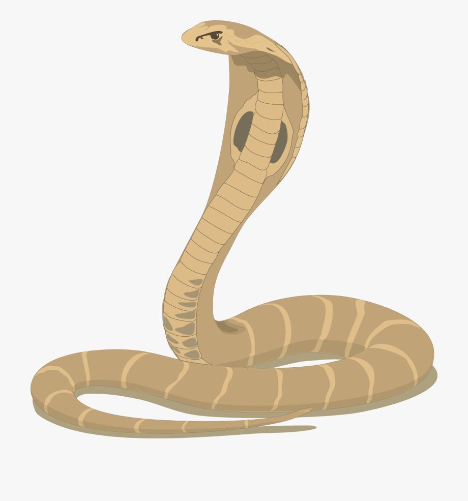 Cobra Snake Cartoon.