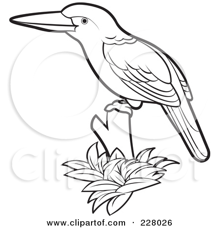 King fisher clipart #10