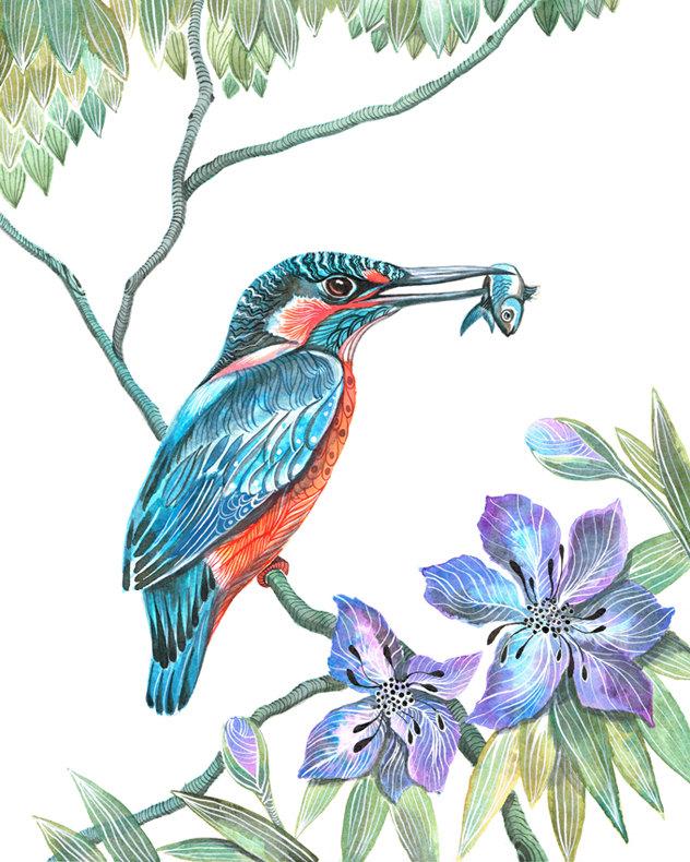 Kingfisher bird clipart.