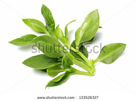 Andrographis Stock Photos, Royalty.