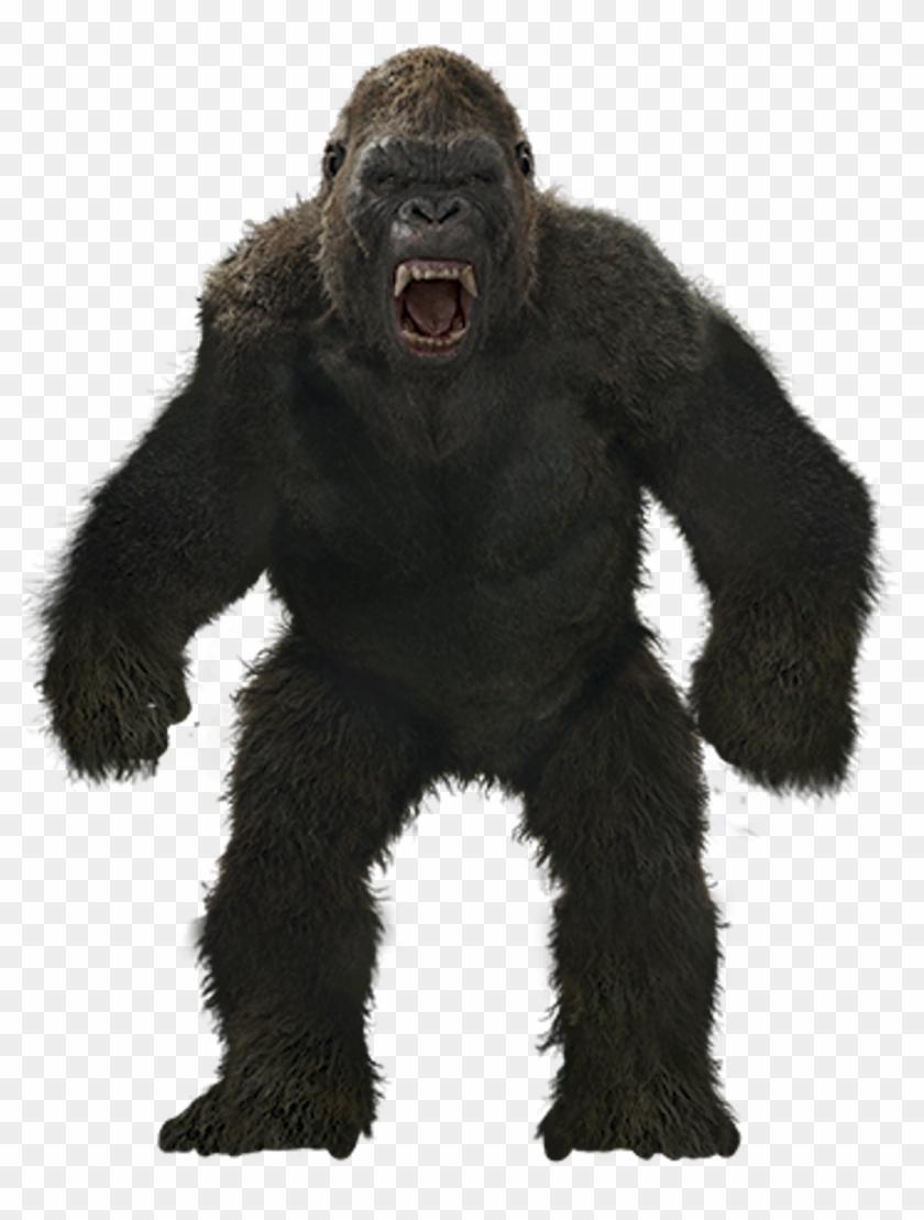 mq #monkey #gorilla #kingkong #angry #anmails #wild.