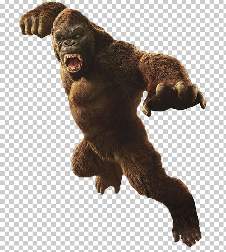 King Kong Godzilla YouTube MonsterVerse Film PNG, Clipart, Bear.