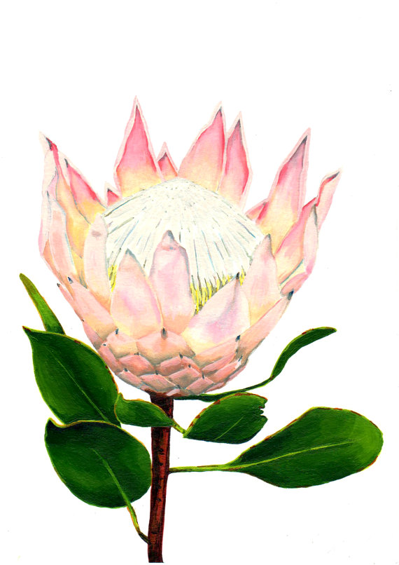 Items similar to South African fynbos King Protea flower.