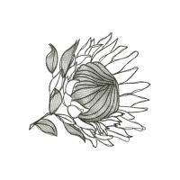 1000+ ideas about Protea Art on Pinterest.