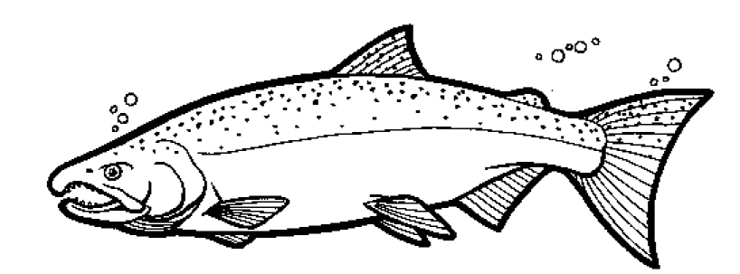 free salmon Coloring Pages.