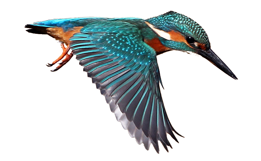 Kingfisher PNG Images Transparent Free Download.