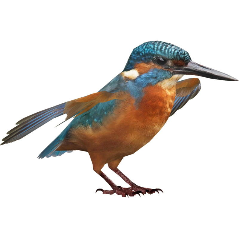 Download Free png Kingfisher PNG HD.