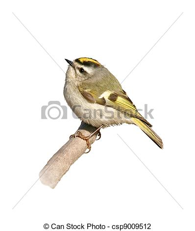 Stock Photo of ontario birds.