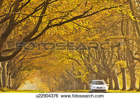 Stock Images of England, Dorset, Kingston Lacy. Car travelling.