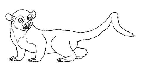 Kinkajou or Honey Bear coloring page.