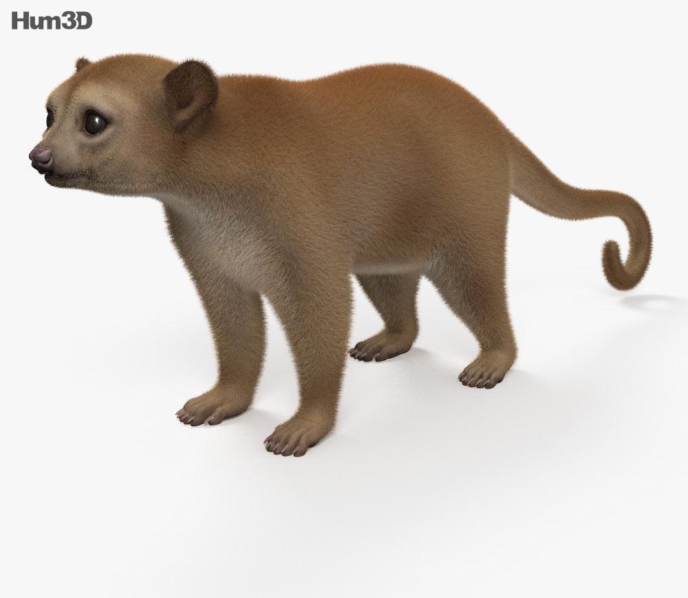 Kinkajou HD 3D model.