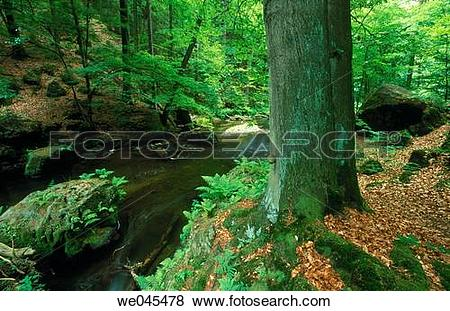 Pictures of Stream, Saxon Switzerland national park, Elbe.