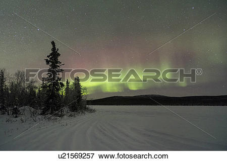 Picture of Northern lights over pine forest and frozen lake near.