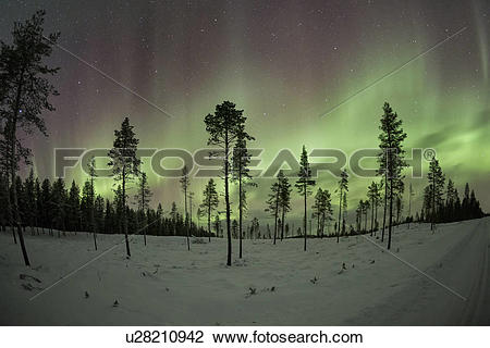 Stock Photo of Northern lights over pine forest near Kiruna.