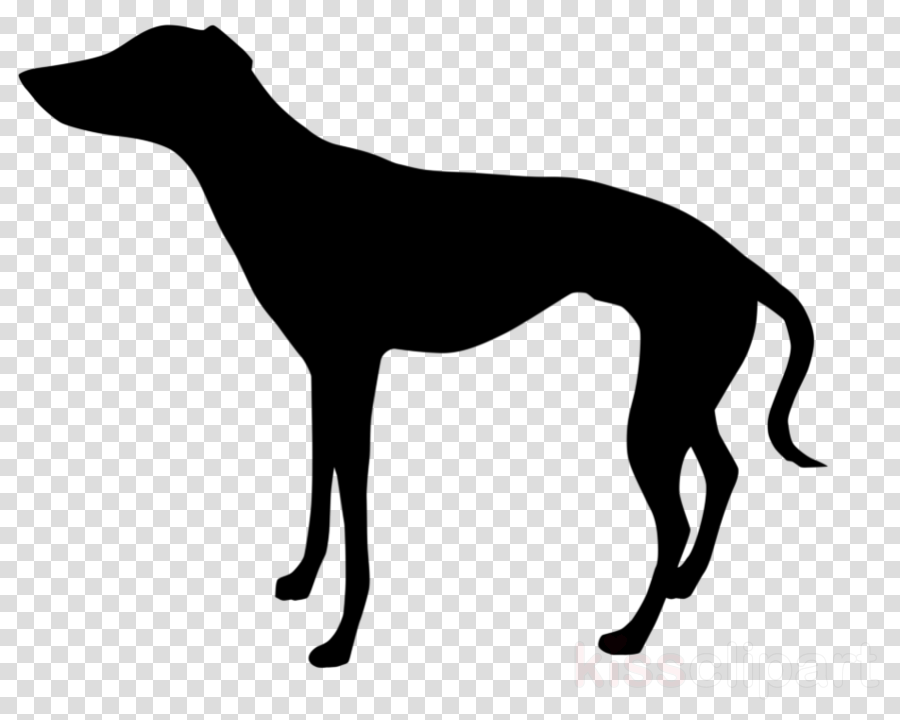 dog whippet sighthound greyhound galgo español clipart.