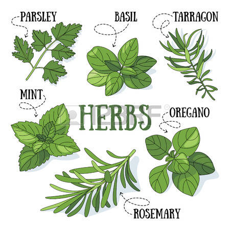 5,127 Kitchen Herbs Stock Vector Illustration And Royalty Free.