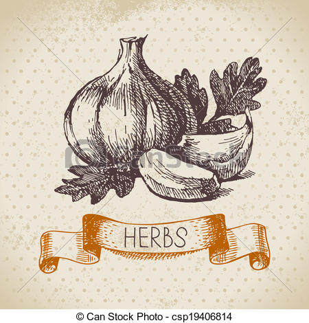 Garlic clove Clipart and Stock Illustrations. 676 Garlic clove.