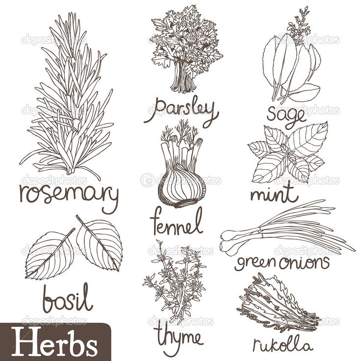 1000+ images about Herb Garden on Pinterest.