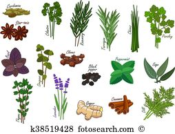 Common sage Clipart Royalty Free. 14 common sage clip art vector.