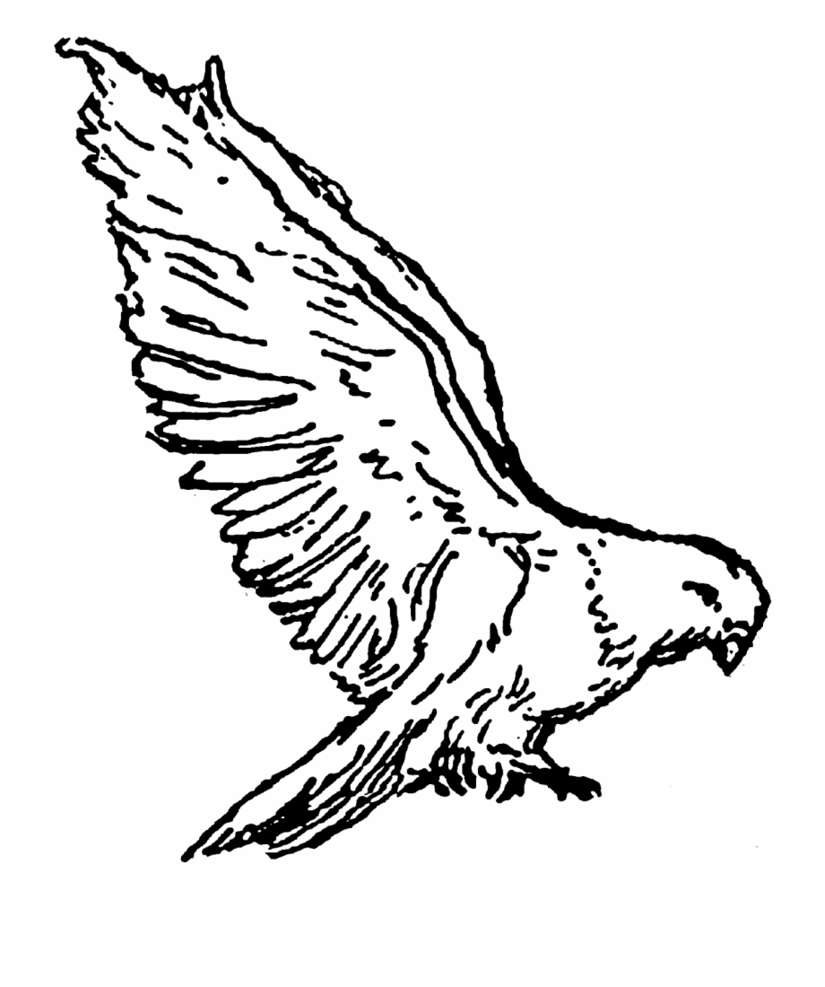Vector Free Clipart Doves.