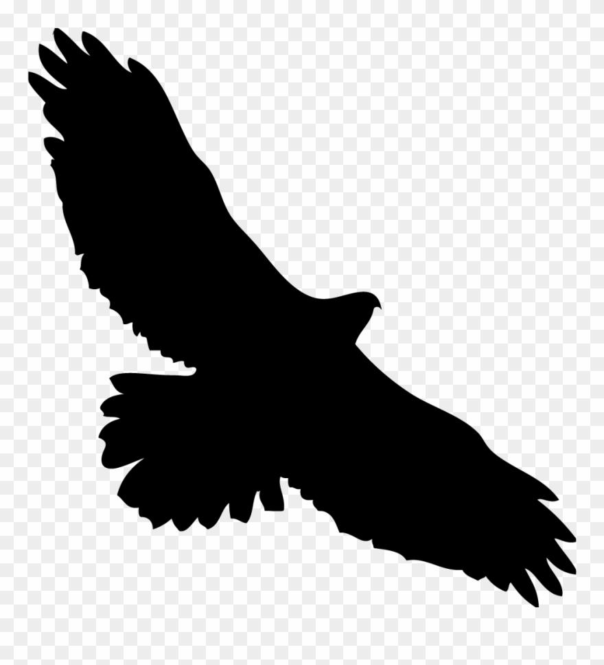 Eagles Clipart Kite Bird.