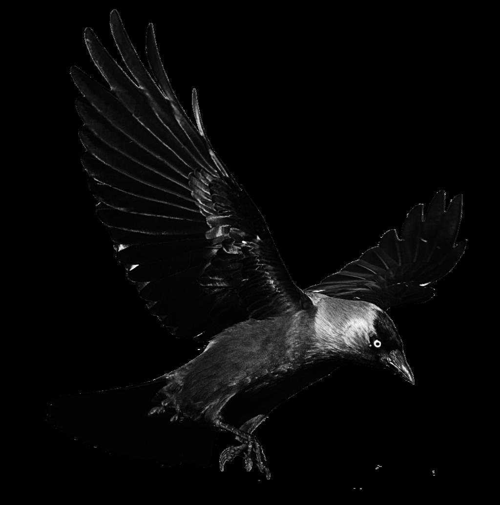 Raven PNG Images Transparent Free Download.