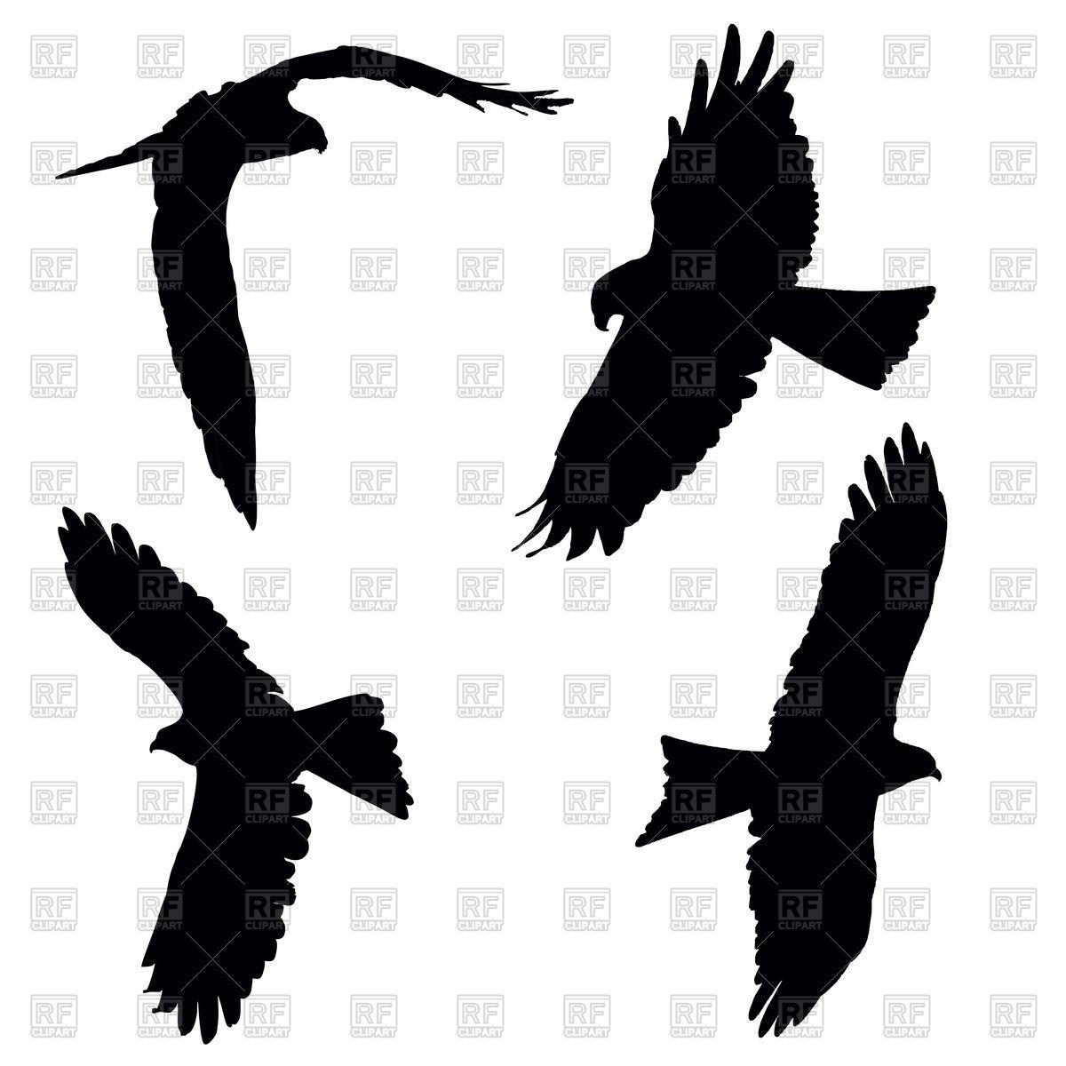 Flying pariah or black kite.