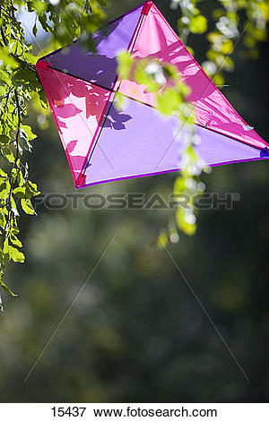 Picture of Kite in tree 15437.