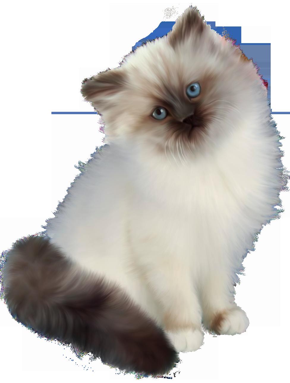 Kitten Transparent PNG Clipart.
