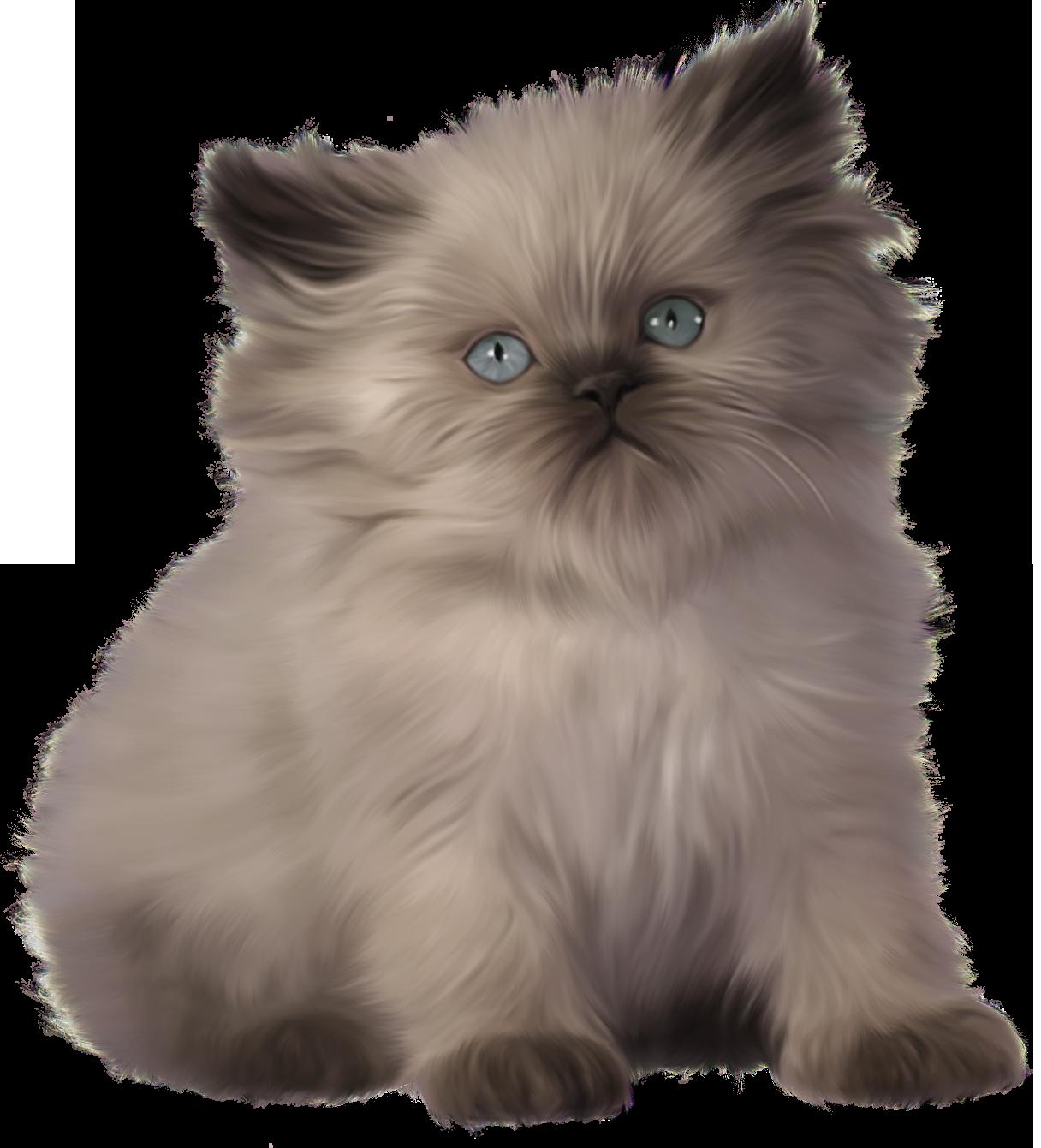 Kitten PNG Clipart.