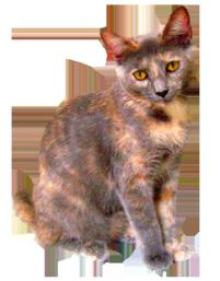 Cat Clip Art, Cat Sketches, Cat Drawings & Graphics.