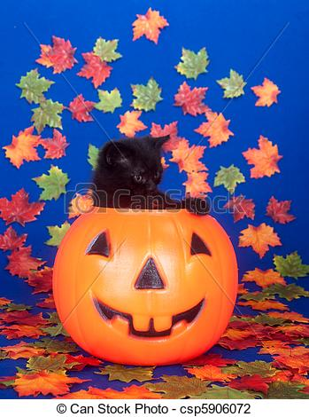 Stock Photo of Black kitten in pumpkin.
