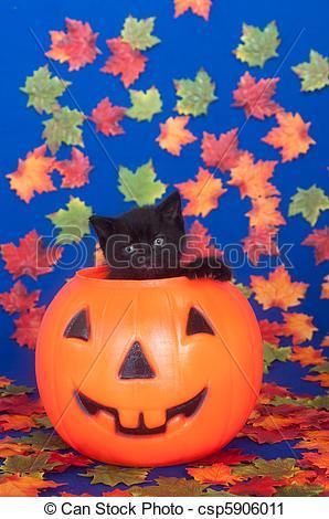 Stock Photography of Black kitten in pumpkin.