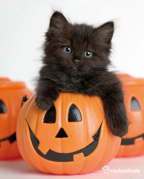 794 best images about Black Kittens on Pinterest.