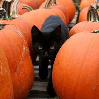 117 Best images about cat/dog/pumpkin on Pinterest.