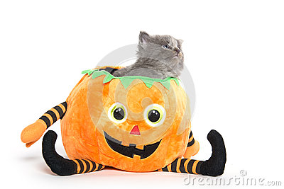 Cute Halloween Kitten Stock Photos.