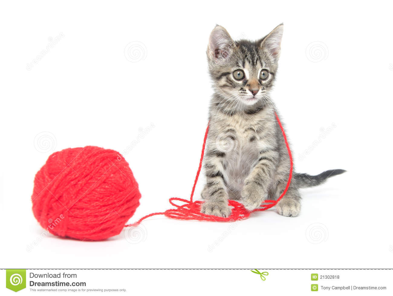 Cat Playing With Yarn Clip Art (72+).