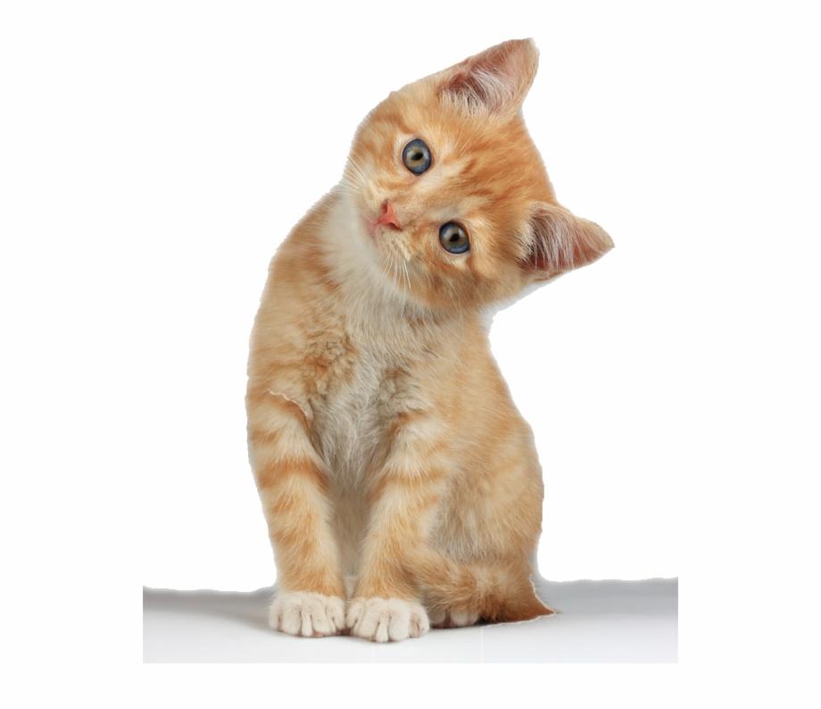 Kitten Free Png Image.