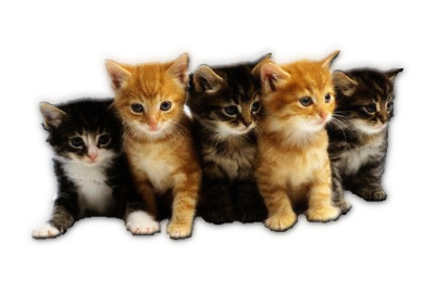Kittens PNG.