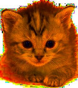 Kitten PNG Transparent Images.