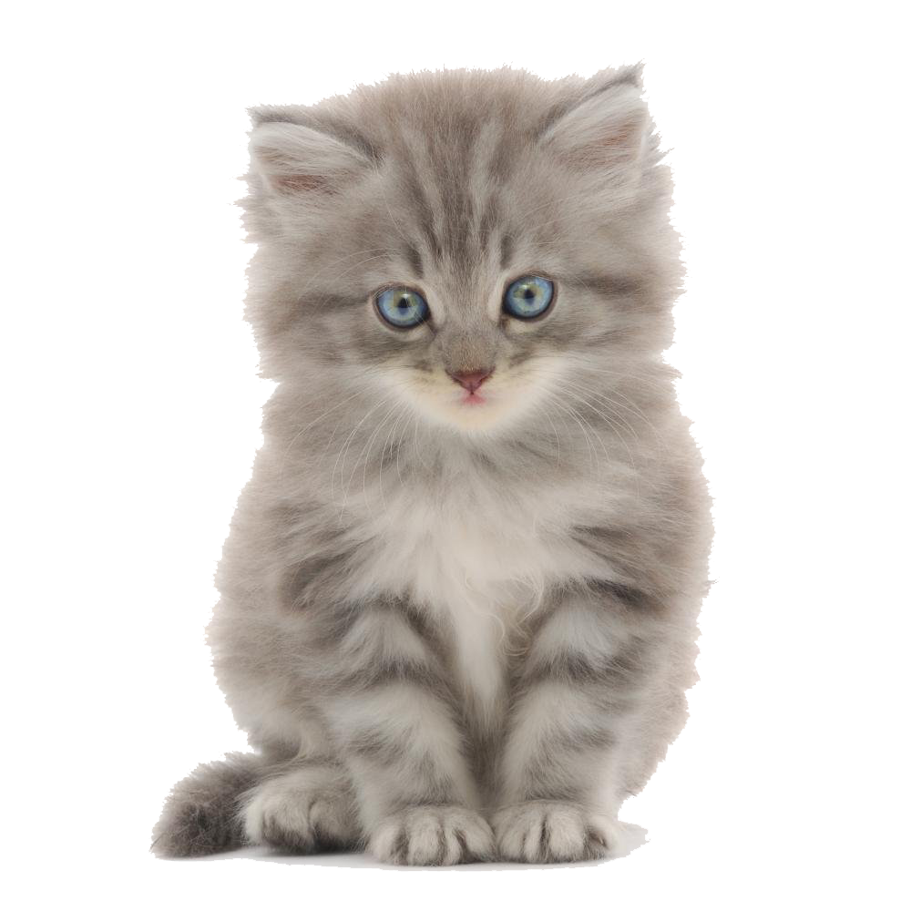 Kittens PNG Transparent Images Free Download.