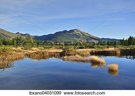 """Stock Photograph of """"Sieben Moser, sour oligotrophic Bog, bog pond."""