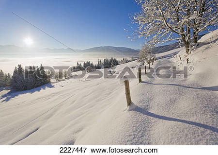 Picture of Trees on polar landscape, Kitzbuheler Horn, Kitzbuhel.