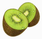 Kiwi Clipart & Kiwi Clip Art Images.