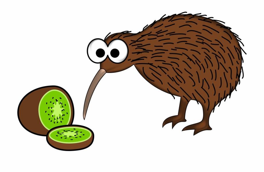 Kiwi Bird.