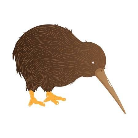 1,102 Kiwi Bird Cliparts, Stock Vector And Royalty Free Kiwi Bird.