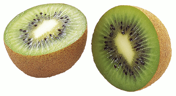 Kiwi bird cut in half - photo#33