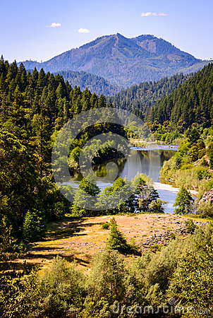 Cedar Forest In Oregon Stock Image.