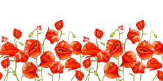 Mohn, Große Rote Blume premium clipart.