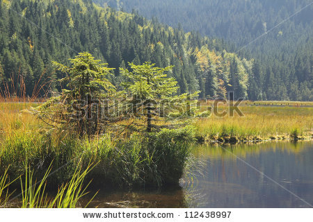 Lake Arbersee Stock Photos, Images, & Pictures.